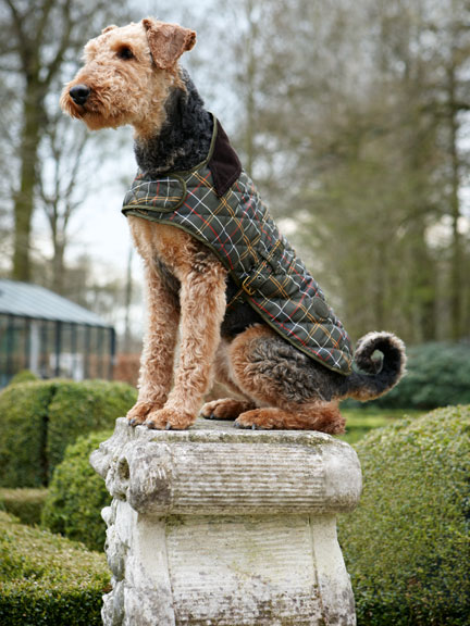 'Dog Coat'  Kariert von Barbour