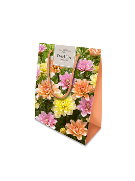 Blumenzwiebel Geschenkset Dahlia Bestellen The British Shop